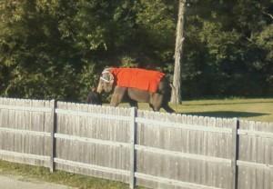 """The Elephant"""